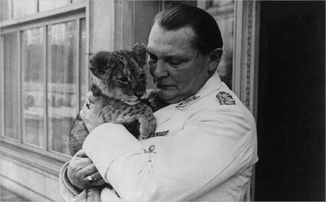 Hermann Goering avec l'un des lionceaux qu'il gardait chez lui