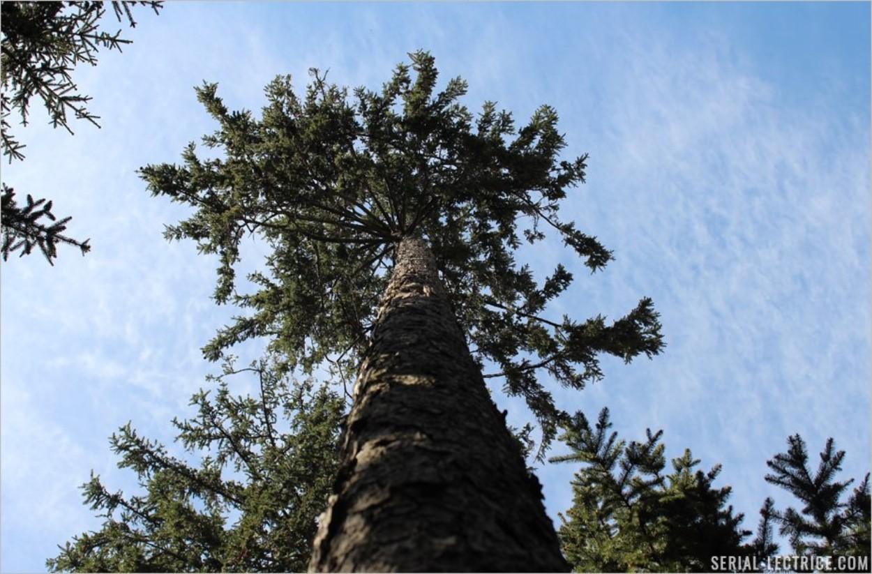 Se laisser absorber par la puissance des arbres