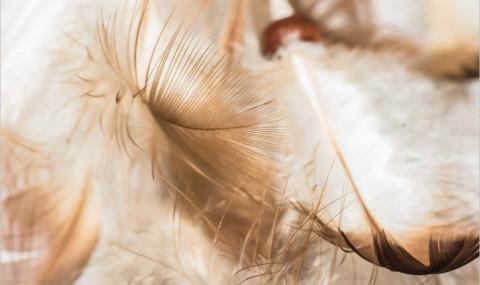 La consolation de l'ange, Frédéric Lenoir : la vie qui va, la vie qui vient